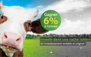 Placement arnaque vaches laitières